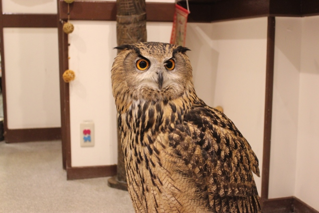 Lexis Japan Owl Cafe 1
