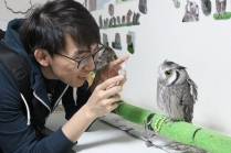 Lexis Japan Owl Cafe 14