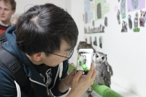 Lexis Japan Owl Cafe 15