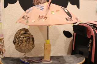 Lexis Japan Owl Cafe 2