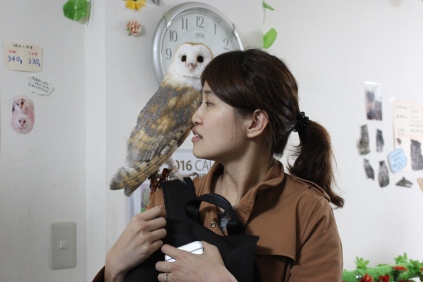 Lexis Japan Owl Cafe 20