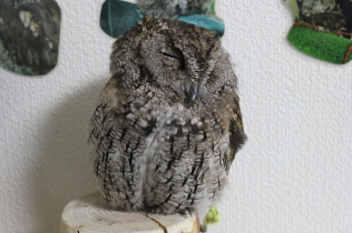 Lexis Japan Owl Cafe 3